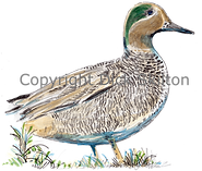 Standing duck orignal artwork shoot cards game shooting