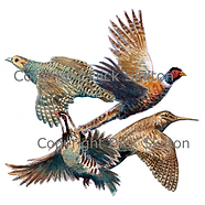 Pheasant partridge woodcock and grouse game shooting shoot cards