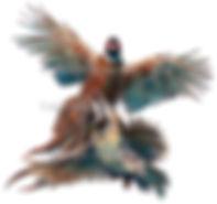 Pheasant partridge in flight shoot cards game shooting