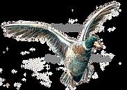 Duck in flight game cards shoot cards bepoke original artwork