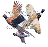 Pheasant and partridge in flight gam shooting shoot cards