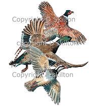 Pheasant partridge duck gam shooting shoot cards