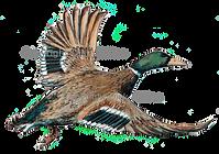 Duck mallard in flght shoot cards game shooting original artwork