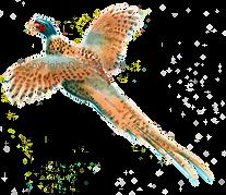 Cock pheasant in flight bespoke shoot cards game shooting original artwork