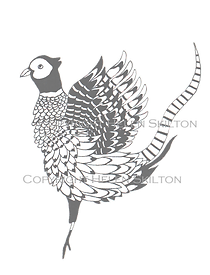 Improved show off pheasant grey copyrigh