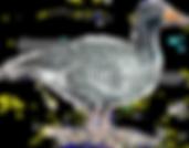 goose coloured no background copyright.p