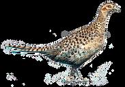 Hen pheasant original artwork bespoke shoot cards game shoot cards