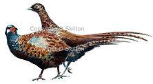 Brace of pheasants bespoke shoot cards original artwork