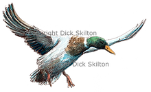 Duck in flight original artwork shoot cards game shooting