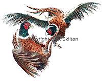 Fighting pheasants bespoke shoot cards original artwork