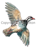 Partridge in flight bespoke shoot cards game shooting original artwork