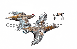 Grouse in flight shoot cards game shooting original artwork