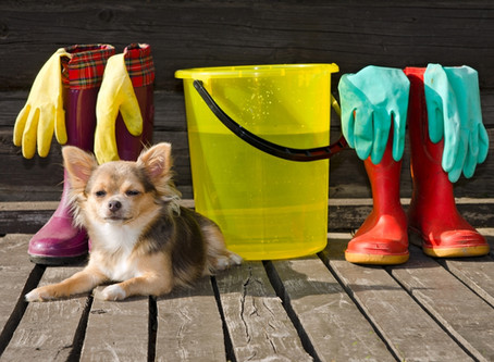 HOUSEHOLD DETERGENTS AND PETS!