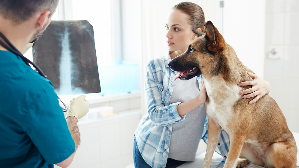 Pet dandruff can be a real head scratcher ! Don't you worry, we got you..png