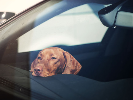 DO NOT LEAVE YOUR PET UNATTENDED IN A PARKED CAR DURING THE WARMER MONTHS!!
