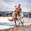 Thumbnail: Tractive GPS Pet Tracking