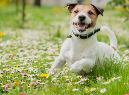 The turmoil of finding out if your pet has allergies!