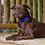 "Thumbnail: Lupine Pet 1""collar 12-20 ( 4 colour choices )"