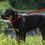 "Thumbnail: Lupine Pet 1"" leash 4' long ( 5 colours available )"