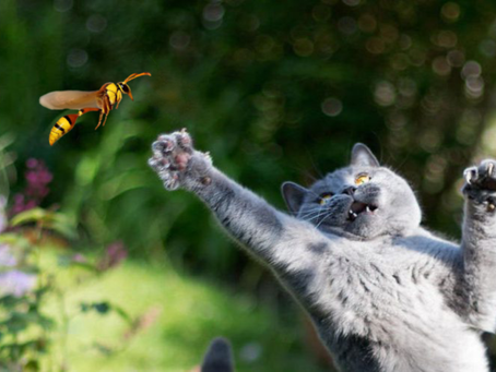 Insect stings and spider bites in pets