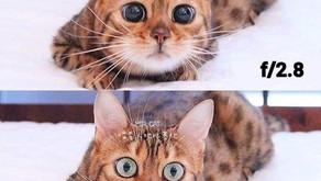 Non hai mai capito come funziona il diaframma? Te lo spiega questo gatto!