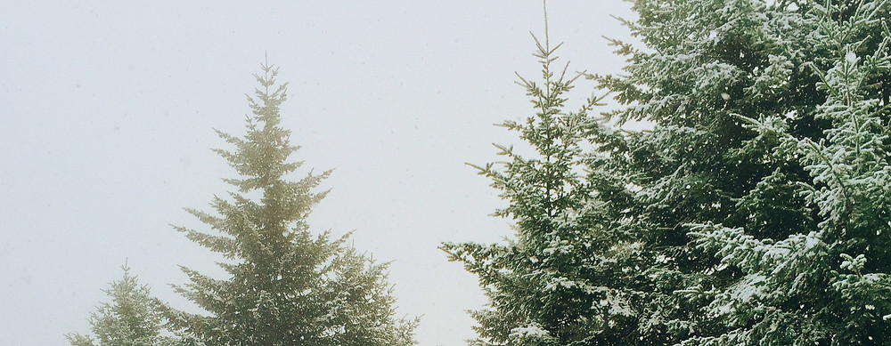 Winter trees landscape