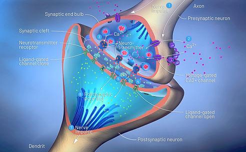 neurociencia, especialista, aprendizagem