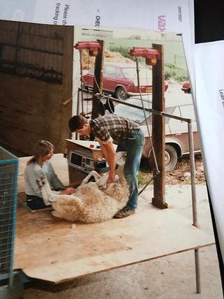 barbara wiseman scanning a pregnant sheep