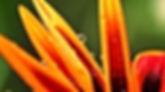 jardim-rj-jardineiro-jardinagem-profissional-tj-rj-barra-da-tijuca