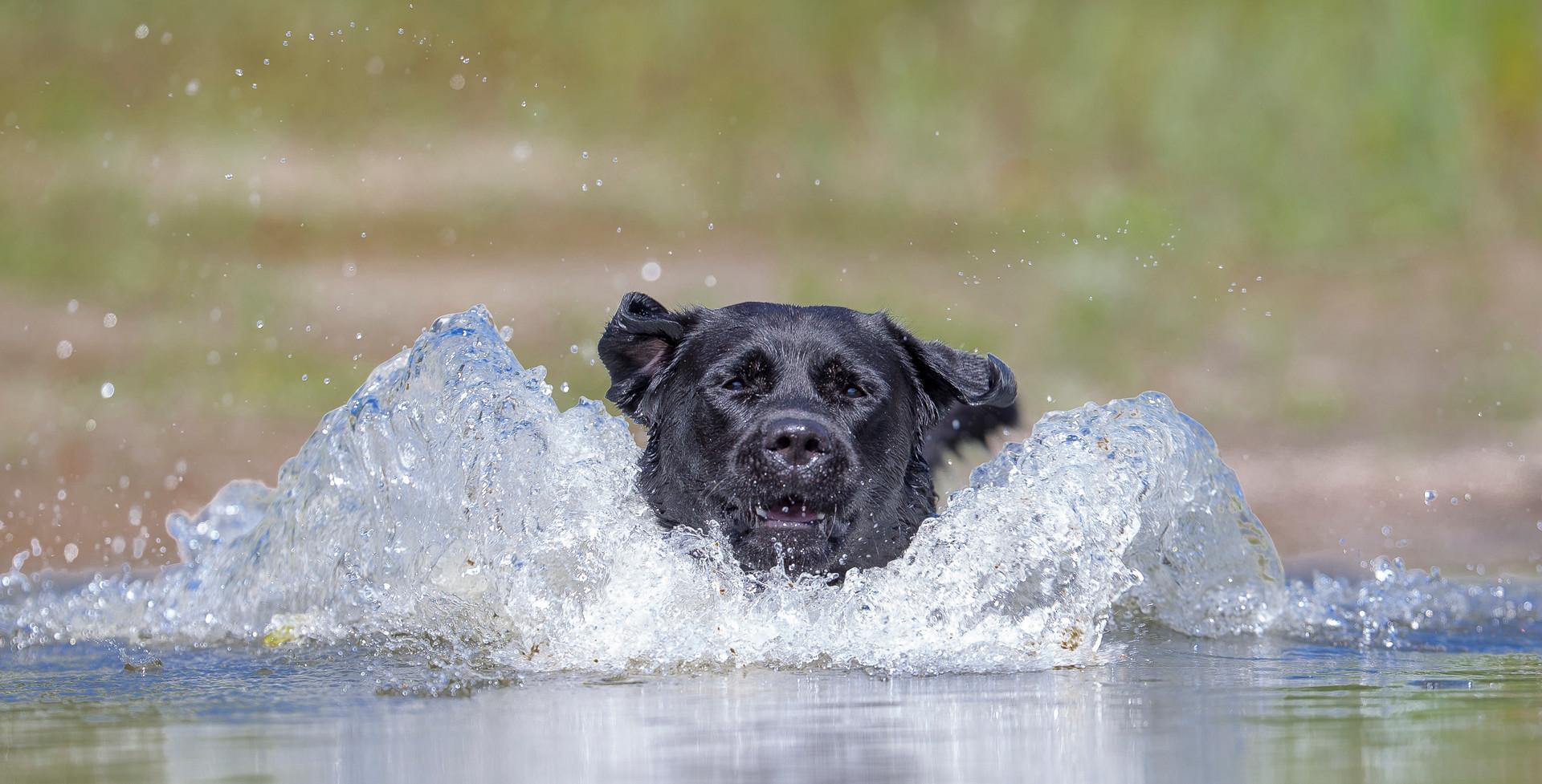 Waterplezier
