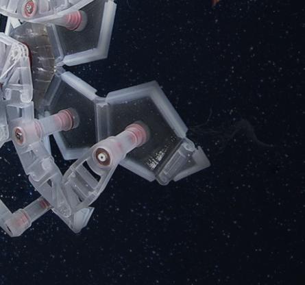 bio_robot_underwater_manipulation