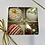 Thumbnail: CAKE TRUFFLE ASSORTMENT BOX -  10 BOXES OF 4