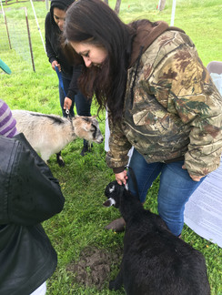 A 4-H Member learning how to show a dairy goat at Showmanship Clinic.
