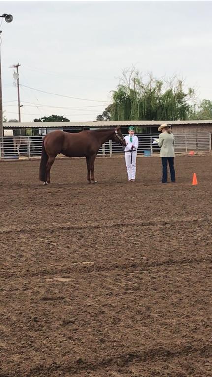 A Tassajara member showing their horse at the Contra Costa County Fair