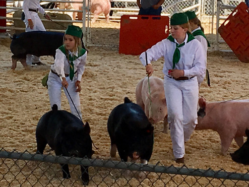 The Market Swine Members showing at the Contra Costa County Fair