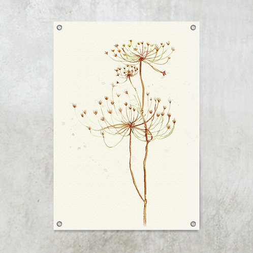 Dried hogweed  | Tuinposter