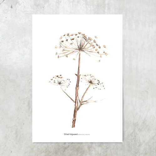 Hogweed | Tuinposter 300x420mm