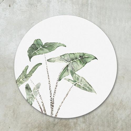Alocasia Zebrina | Deco circle