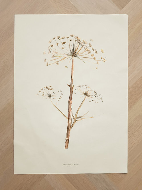 Canvas | Hogweed