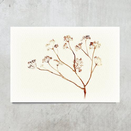 Dried twig