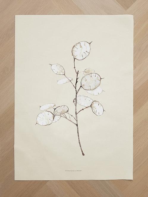 Canvas | Lunaria unau