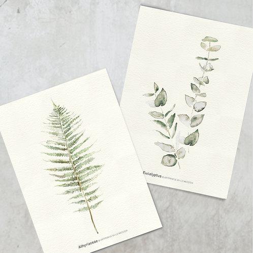 Athyriaceae & Eucalyptus | Kaart formaat
