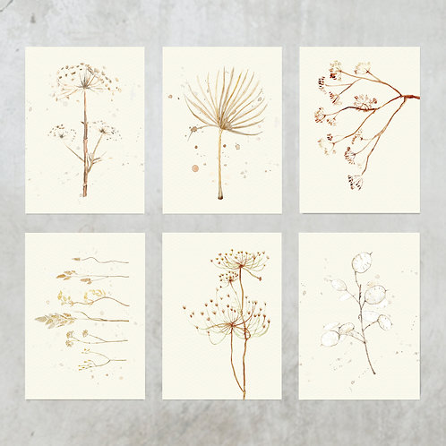 Dried flower cards  | 6 stuks