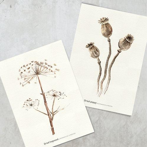 Dried hogweed & poppy | Kaart formaat
