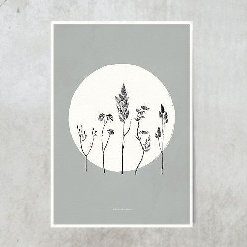 Dried flowers circle | White on blue grey