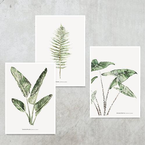 3x mini ARTprint A5 | Botanisch