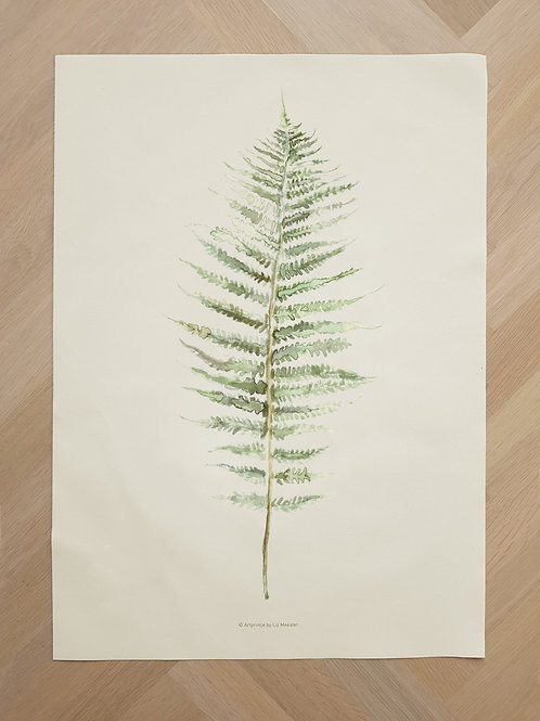 Canvas | Frond