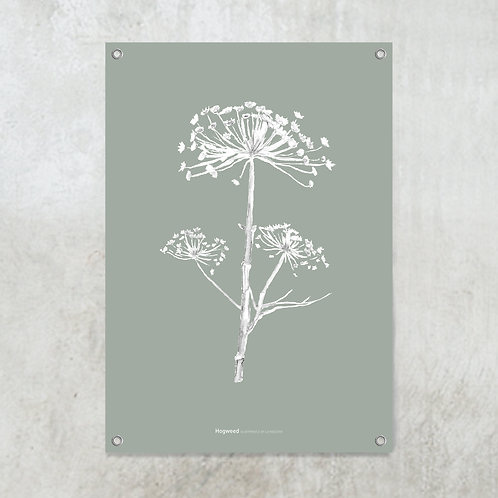 Dried hogweed green-grey | Tuinposter
