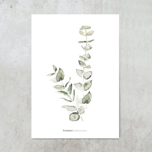 Eucalyptus | Tuinposter 300x420mm