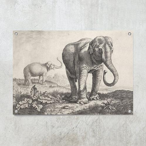 Elephants   Tuinposter